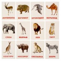 """Карточки """"Животные жарких стран"""", ЛасИграс"""