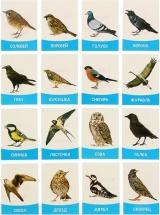Обучающие карточки ЛасИграс Птицы России 16 шт