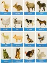"""Обучающие карточки """"Домашние животные и птицы"""" 16 шт"""