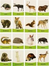 Обучающие карточки ЛасИграс Дикие Животные 16 шт