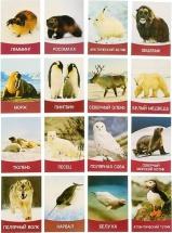 Обучающие карточки ЛасИграс Животные Севера 16 шт