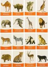 """Обучающие карточки """"Животные жарких стран"""" 16 шт"""