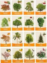 Обучающие карточки ЛасИграс Деревья и кустарники 16 шт