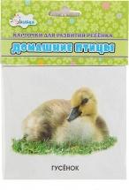 Обучающие карточки Улыбка Домашние птицы 12 шт