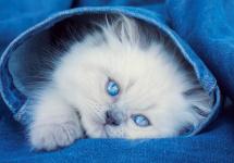 Мозаика алмазная Рыжий кот Голубоглазый котенок 30х40 см